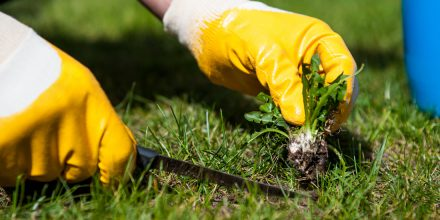 How to control weeds in a newly seeded lawn