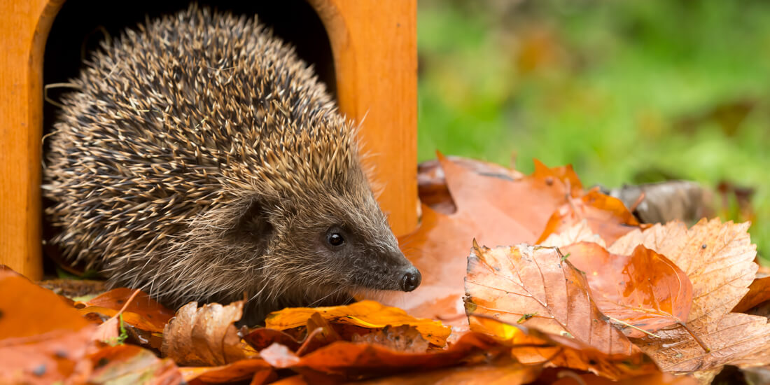 How to help wildlife in your garden this winter