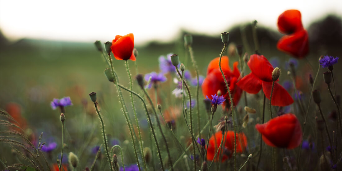 Can I sow wildflowers in winter?